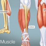 build calf muscle
